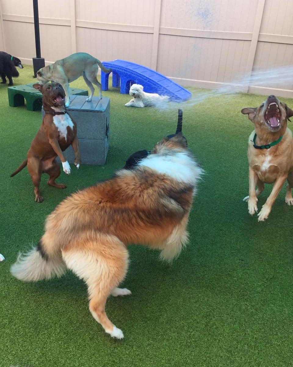Savannah Dog Parks